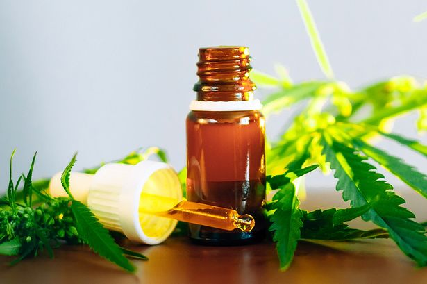 All that you should Know Regarding CBD Oil